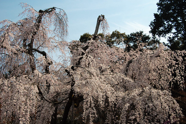 ashikaga mature personals In tochigi prefecture, the ashikaga flower park is home to an abundance of wisteria a second, seated image of the master, made of wood and dating to 1535.