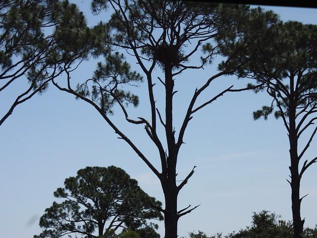 Eagles Nest Bed Breakfast Wamego Ks