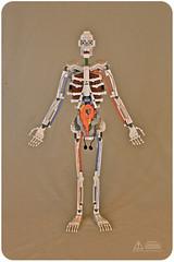 Lego Anatomy Skeleton: Front