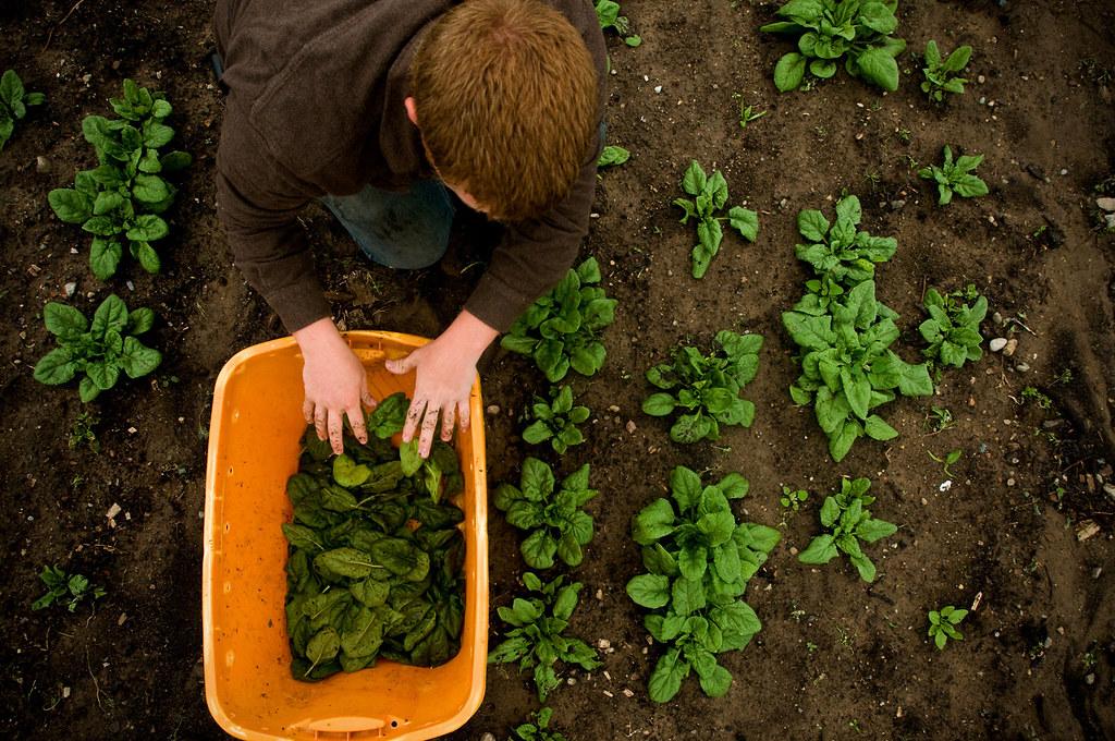 essay on importance of organic farming Free essay on organic farming available totally free at echeatcom, the largest free essay community.