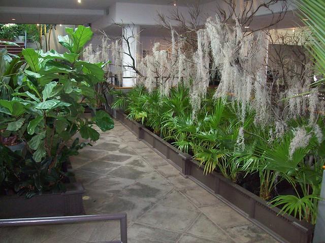 Brooklyn Botanical Garden 2 21 09 Indoor Winter Display With Sphagnum Moss Flickr Photo Sharing