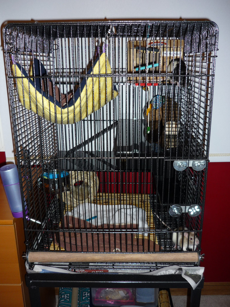 Ratisson Suites Bird Cage Converted To Rat Cage This