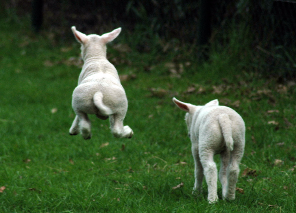 Jumping For Joy Animals Jump For Joy