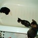 Kittens + Bathtub + Ping Pong Ball = Yay!