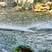 Palenque - Waterfalls of Misol-Ha