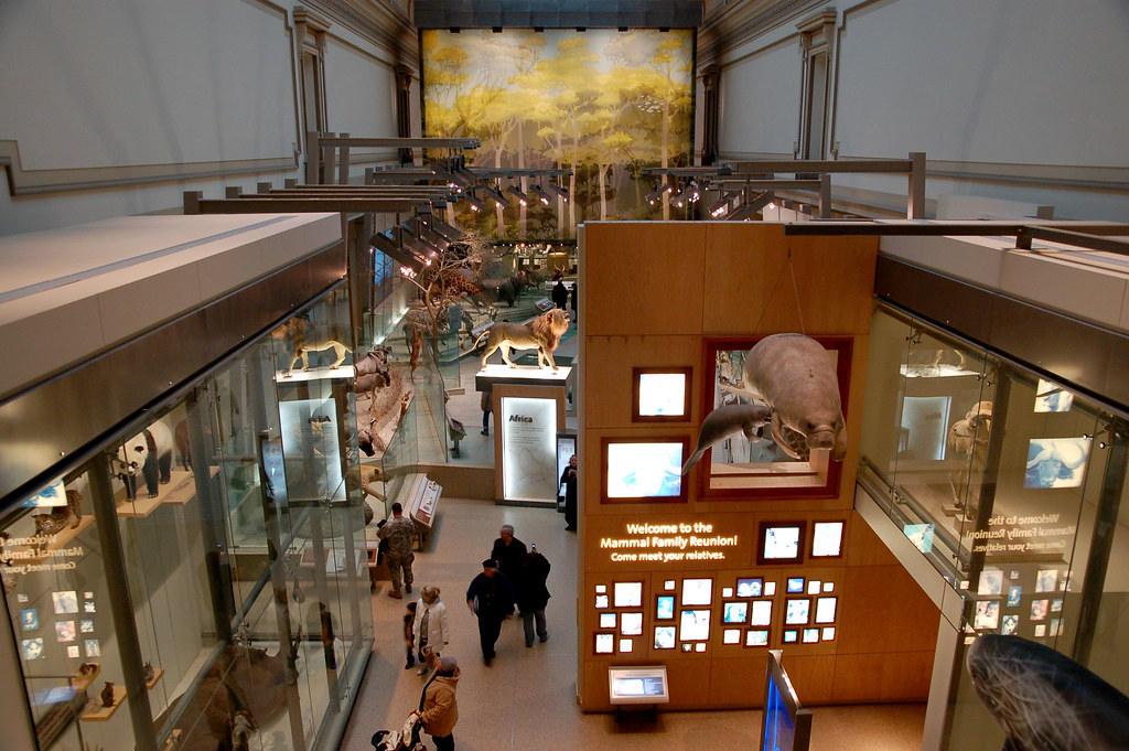 Foyer Museum Jobs : Hall of mammals at the smithsonian national museum