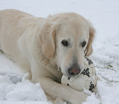 Ditte in the snow