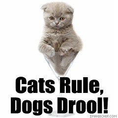 the use of symbolism in the poem cats rule dogs drool Cat or dog (cats rule, dogs drool) what i've been doing shared projects (39) view all cat or dog let's bounce by kingmaddyp poem generator remix by kingmaddyp.