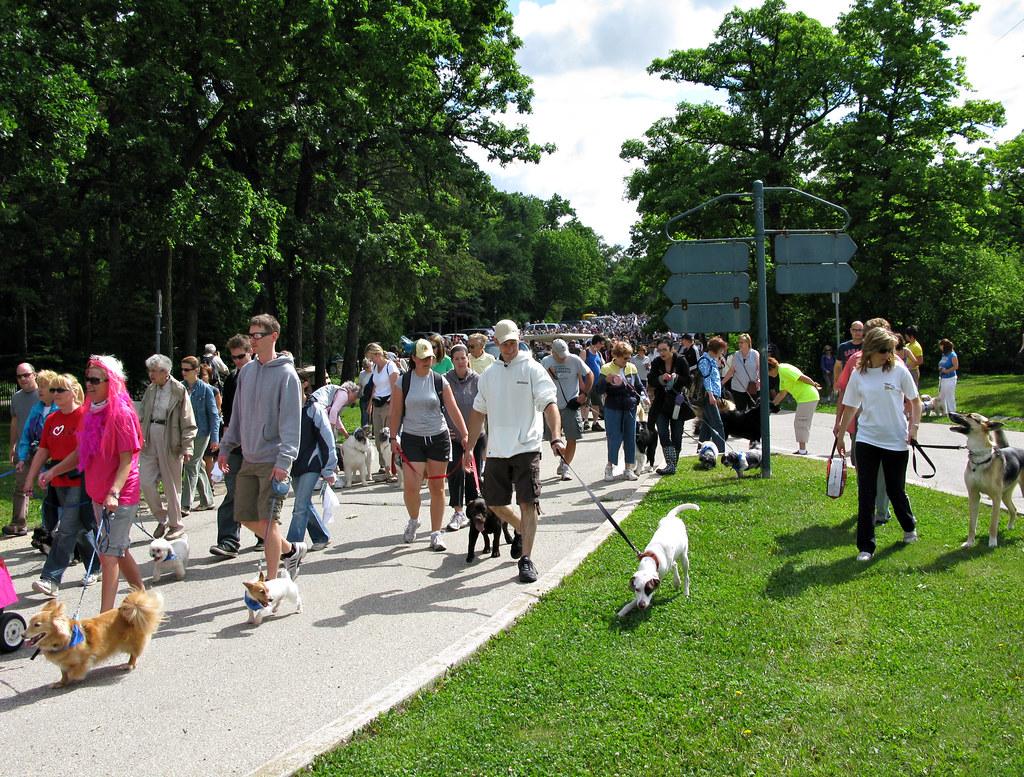 Winnipeg Humane Society Small Dogs For Adoption