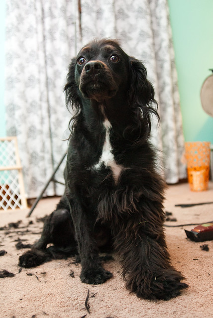 Halfway Home Dog Rescue Notts