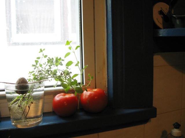 Avocado Green Kitchen Appliances