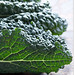 braised greens6