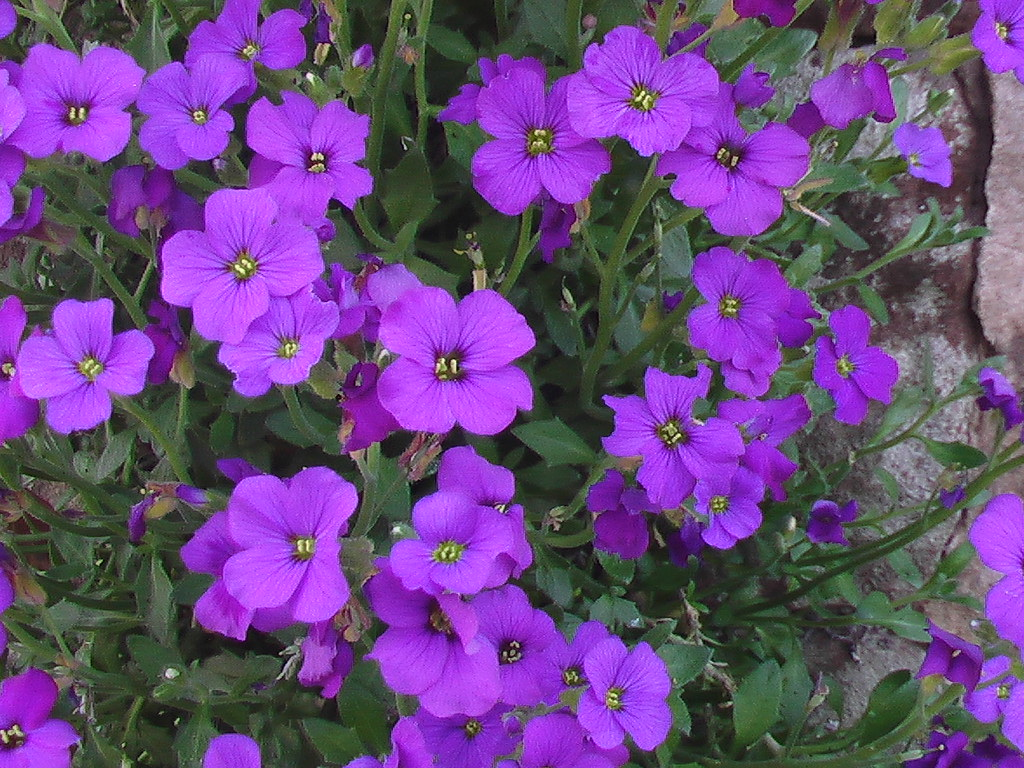 Small purple flowers Small purple flowers growing from a w…