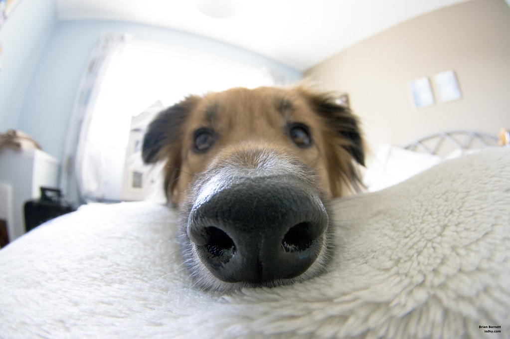 Dog S Nose Over A Humans Nose