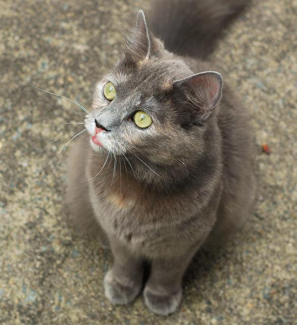 Advantage Multi Cats Site Petsmart Com