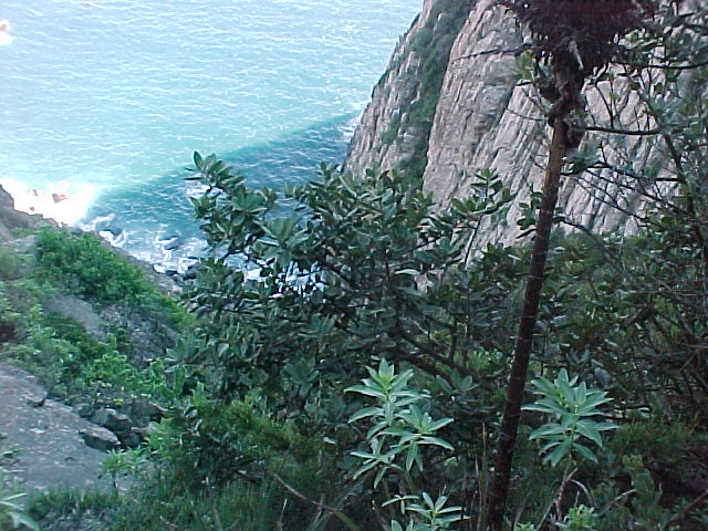 Sapotaceae pouteria splendens a dc o kuntze jard n for Jardin botanico vina