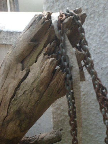 Old tree bark and chains | by Apiii