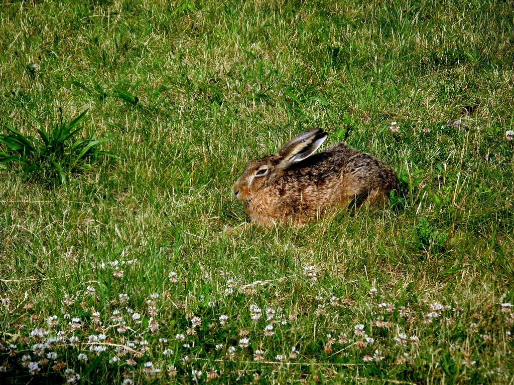 Un petit lapin un petit lapin s 39 est cach dans le - Mon petit lapin s est cache dans le jardin ...