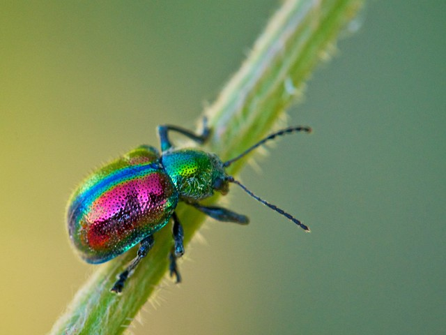 Colorful Beetle | Flickr - Photo Sharing!