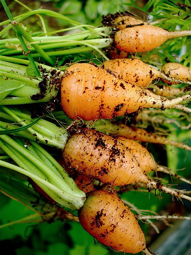 Baby Carrots | by Chiot's Run