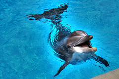 Smiling Dolphin at Mirage Hotel in Las Vegas | by jhandelman