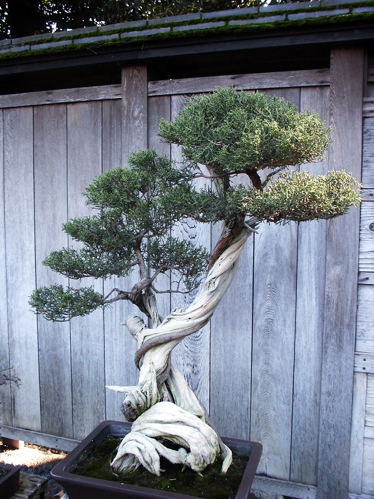 Huntington Library Japanese Bonsai Garden 0078 ...
