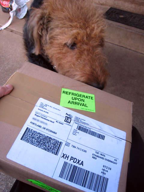 Yummy Dog Treats  Barony