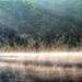 Waltz of the Mist