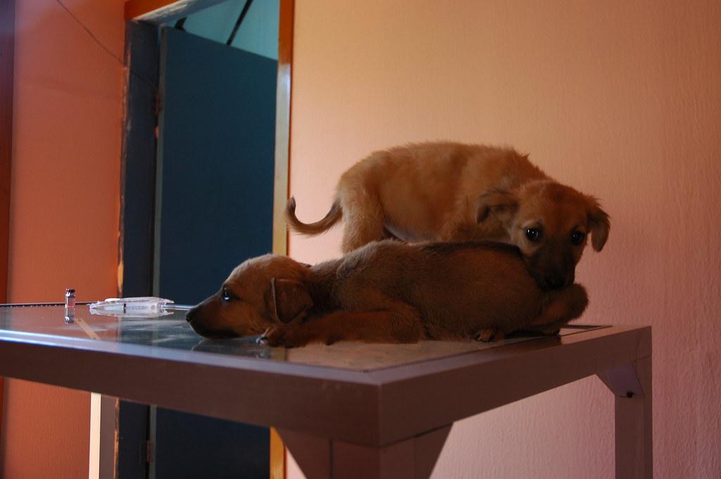 Free Rabies Shots For Dogs In Newark De