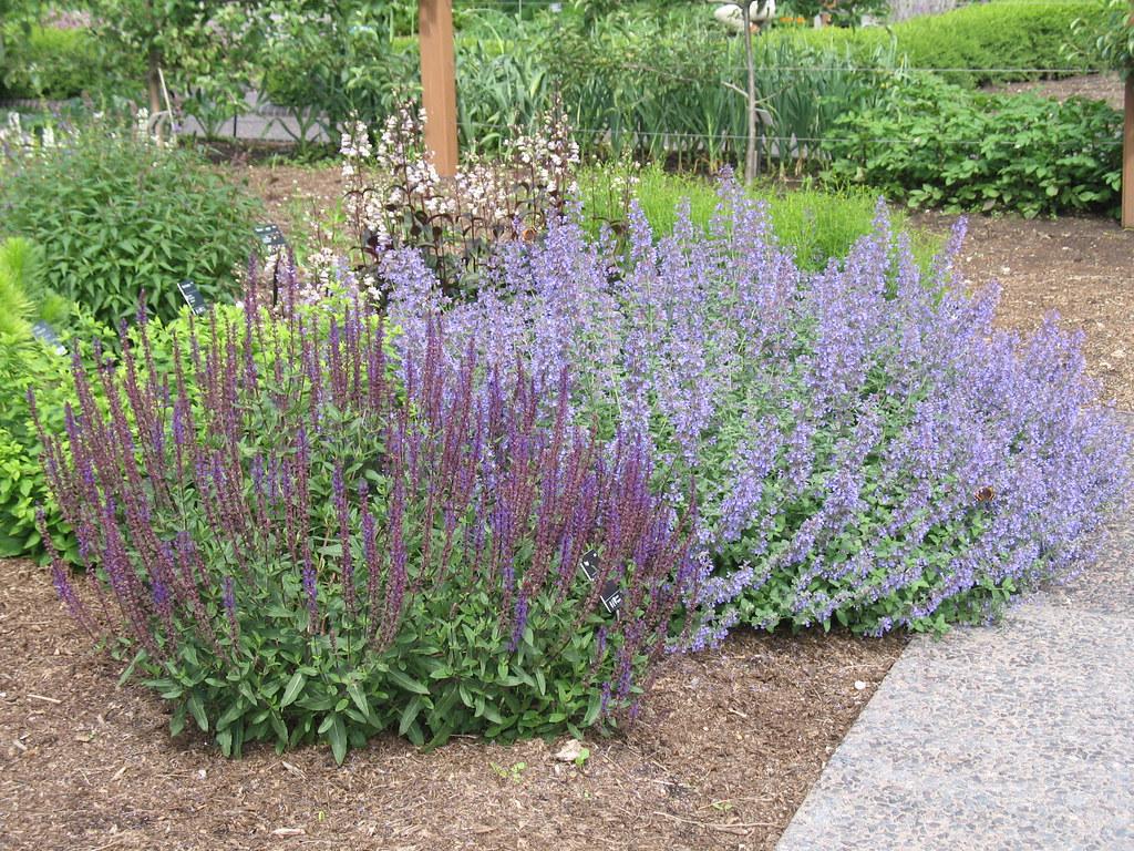 Exceptional How To Create A Low Maintenance Garden #1: 4622100457_3b0b739c62_b.jpg