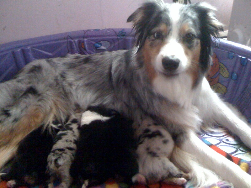 Skye tending to her puppies, June 2010