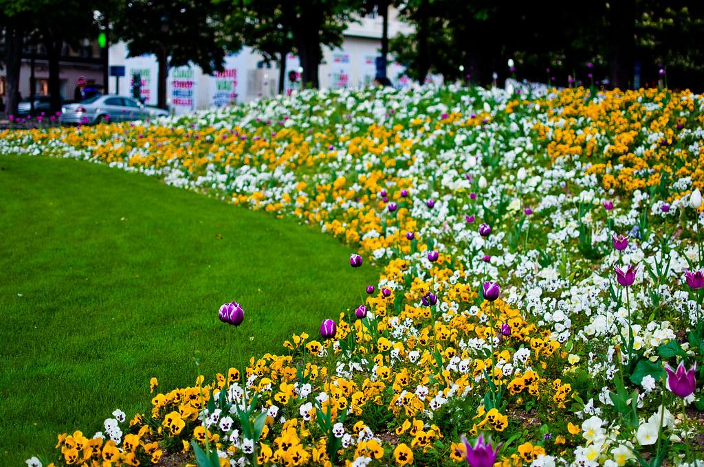 Elisefleur florecillas en los jardines de los el seos for Jardines eliseos
