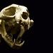 Boned Feline