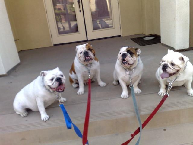Celebrity Pet Dogs