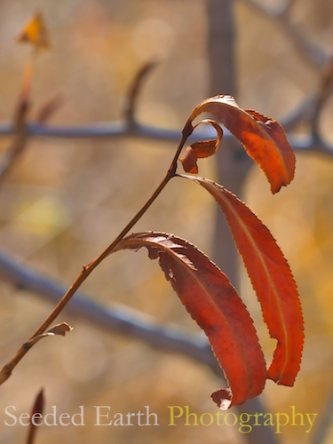 Orange Leaves | by bo mackison