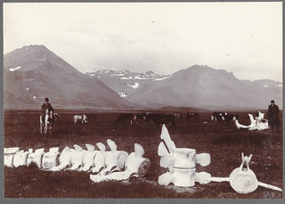 On the S. Coast of Snæfellsnes, near Búðir. | by Cornell University Library
