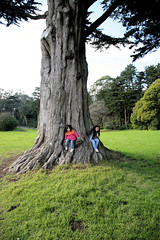 Golden Gate Park - big tree