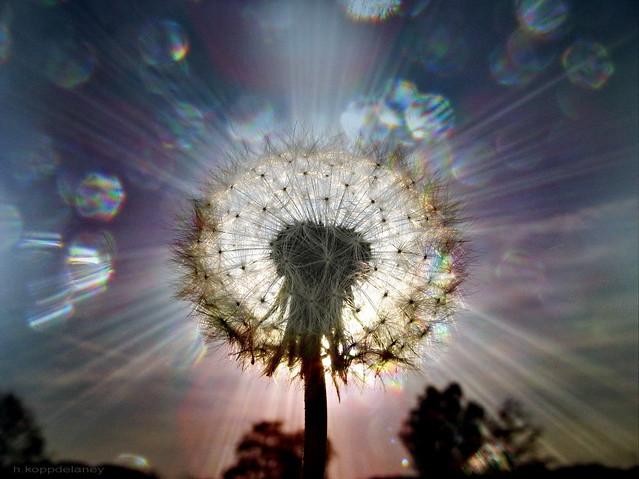 ... Wisdom - Seeds of Light | by h.koppdelaney & Wisdom - Seeds of Light | Seeds of Light And Rinpoche whispeu2026 | Flickr