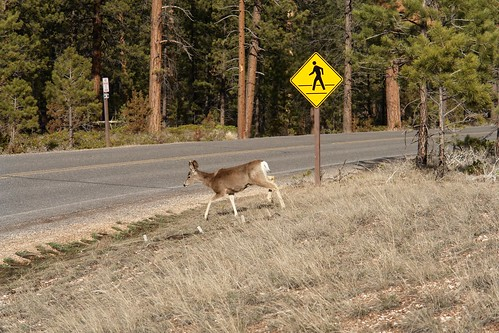 Wrong Sign, Deer or Pedestrian Crossing? | by Alex E. Proimos