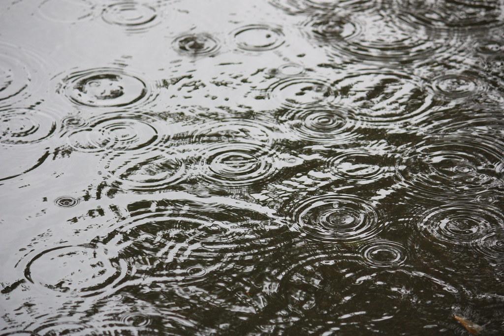 Rain Ripples 5   ninniane   Flickr