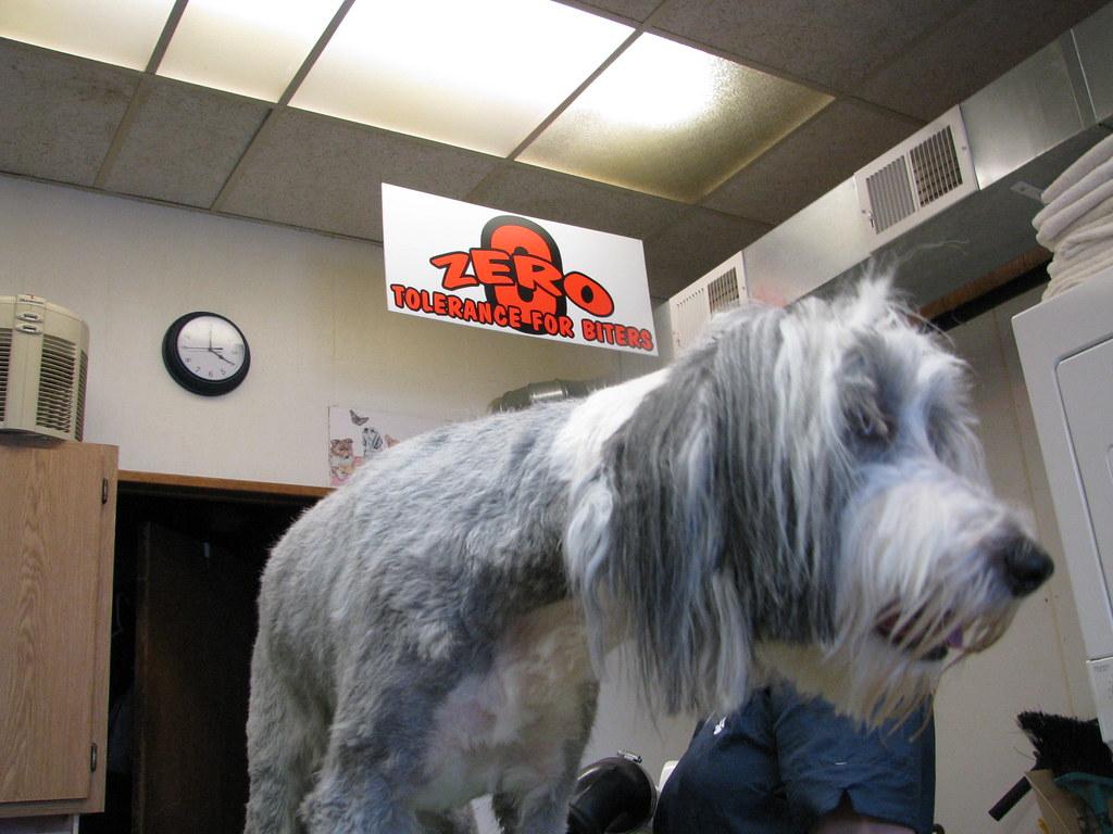 Dog Grooming Salon Name Ideas