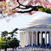 Jefferson Memorial under cherry blossoms