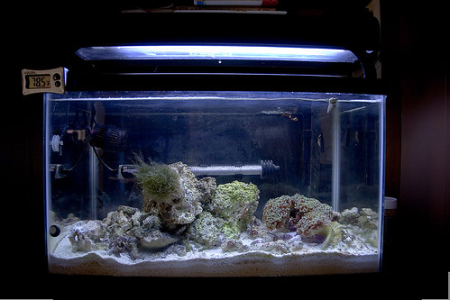 My 10 Gallon Saltwater Aquarium Flickr Photo Sharing