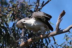 Female Next To Nest, 1st September