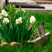 Perched Robin