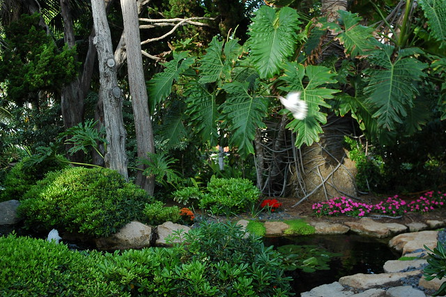 White Dove In The Garden With A Branch Above The Koi Pond Elephant Ear Leaves Stones Fountain