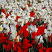 A flower orgy