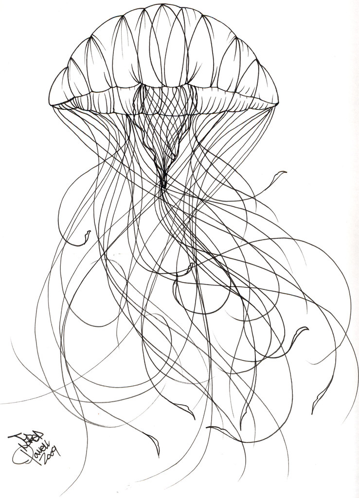 Jellyfish Tattoo Sketch Jellyfish Tattoo Sample