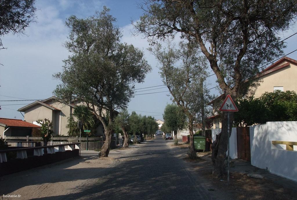 la route des oliviers, avec au fond, l'arc.