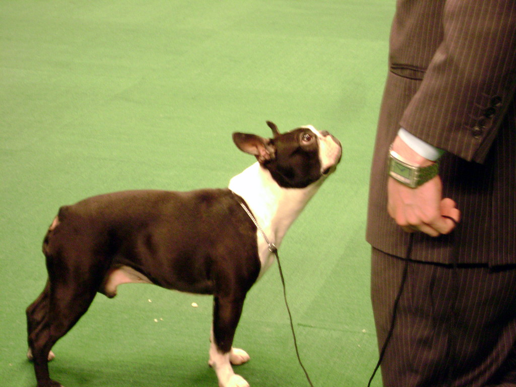 Abuse At Westminister Dog Show